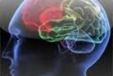 Brain Age Test : découvrez votre âge cérébral !