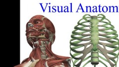 Visual Anatomy: Toute l'anatomie du corps humain en HD