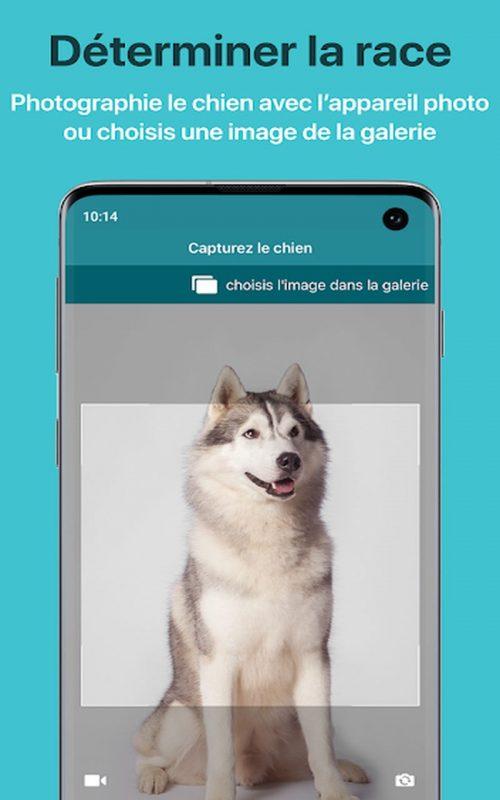 Dog Scanner b