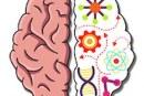 Test du jeu de réflexion Brain Crazy